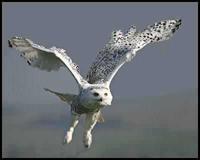 Native American Owl Mythology  Native Languages