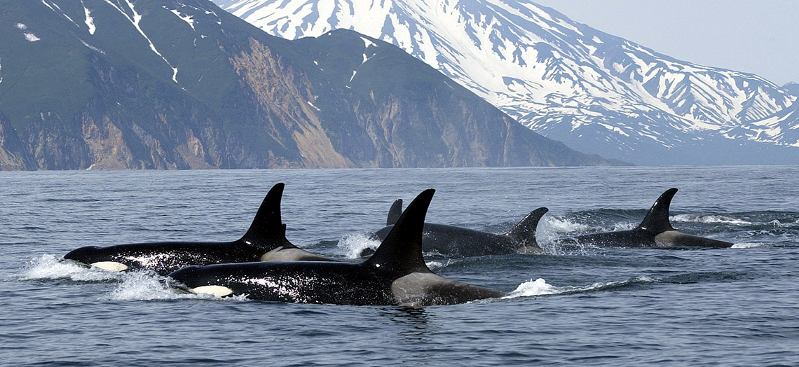 Orca-Group-British-Columbia-Canada-1140x524